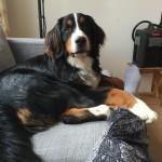 Mara 7 Monate alt