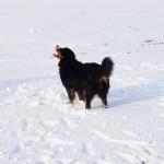März Schneeballfangen