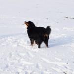 Jetzt hat Bella den Schneeball