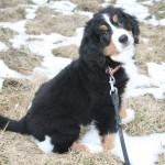 Maras erster Ausflug im Schnee