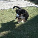 Mara entdeckt den Garten