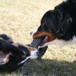 Mara und Bella haben nur ein Spielzeug :)