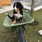 Mara hilft bei der Gartenarbeit mit