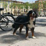 Mara in Lucca
