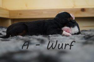 A-Wurf Vorlage