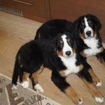 Bonny und Balu