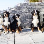 Mara, Bonny, Bella und Balu