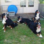 Aron, Bella, Mara und Balu