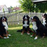 Balu, Mara, Bella und Aron