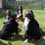 Bonny, Barcley, Balu, Mara und Bella