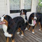Barcley, Bella und Balu