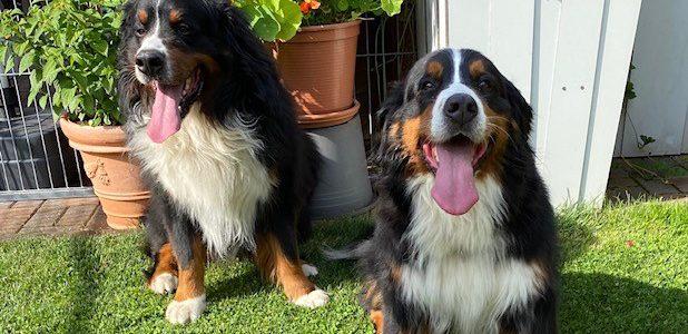 Mara und Taron hatten am 19. Juli 2020 ein Rendez-Vous
